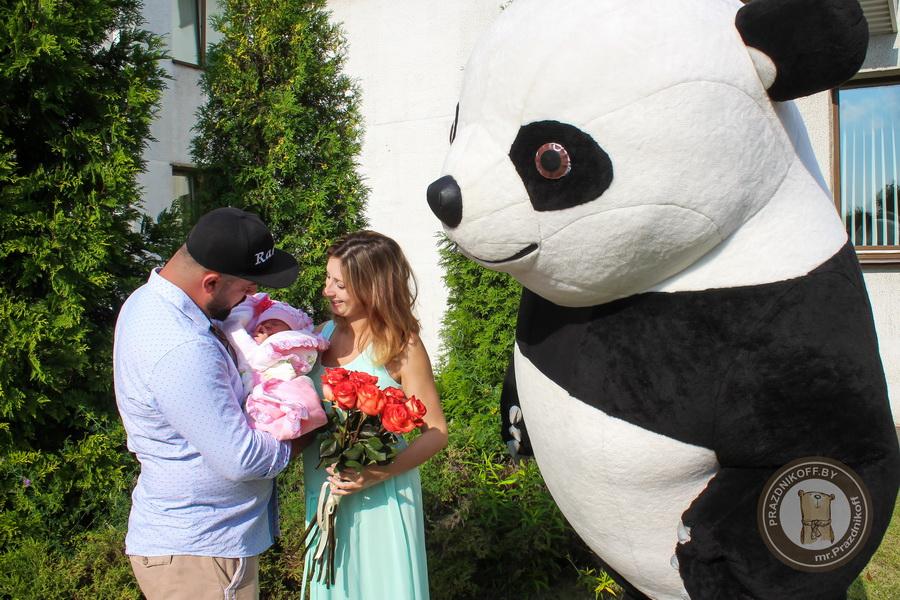 панда на выписке